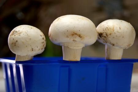 Cómo cocinar hongos a la perfección