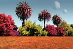 ¿De qué colores serían las plantas en otros planetas?