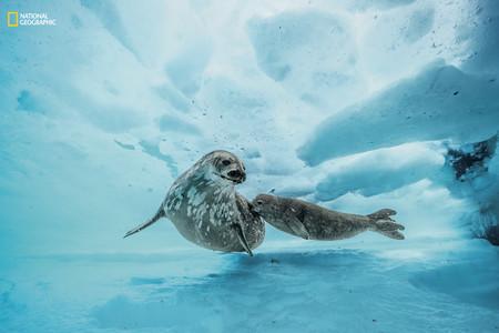 Ngm 0717 Stock 03122015 Under Antarctica 012
