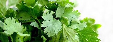 Las mejores formas para conservar la frescura y sabor del cilantro