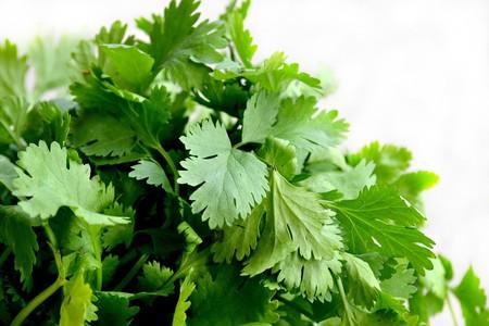 Las mejores formas para conservar el cilantro