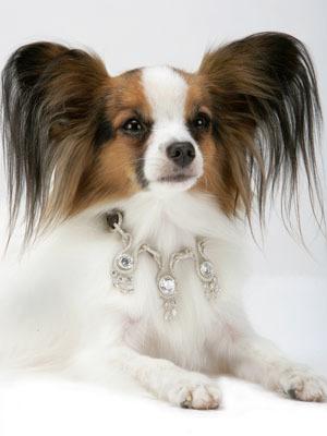 I Love Dogs Collection, algo de elegancia para tu mascota