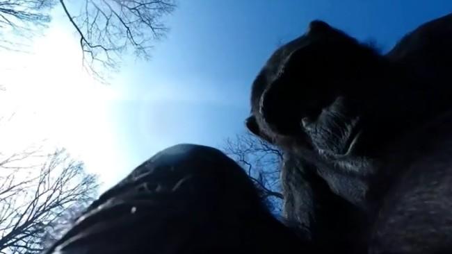 El chimpancé que luchó contra un dron espía