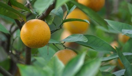 Jardines de enseñanza: cultivar las verduras hace que les gusten más a los niños