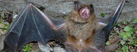 ¿Cómo ven los murciélagos?