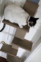 The Climber: el mejor juguete para tu gato