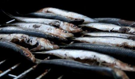 El hierro de los pescados y mariscos