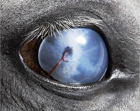 Equus, por Tim Flach