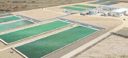 Campos de producción de biocombustible