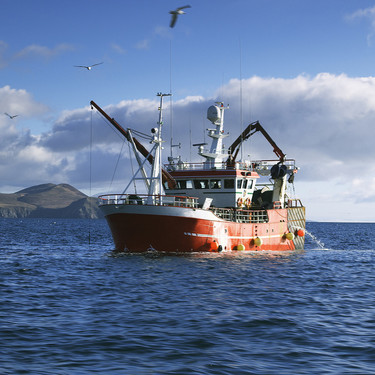 Europa reparte sus cuotas de pesca: qué especies encontraremos el próximo año más baratas y más caras