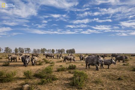Rhinos Feeding Site