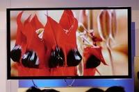 Panasonic ZT60, la nueva referencia en smart TV para los amantes del plasma