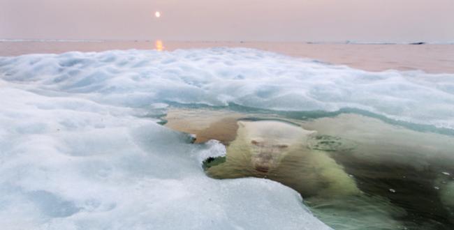 Ya podemos disfrutar las fotografías ganadoras del concurso convocado por National Geographic