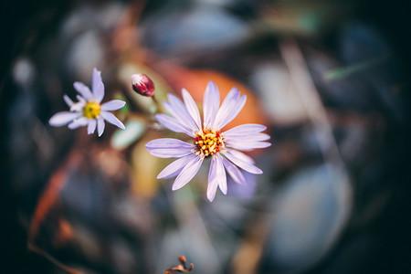 Trucos Mejores Fotos Flores 13