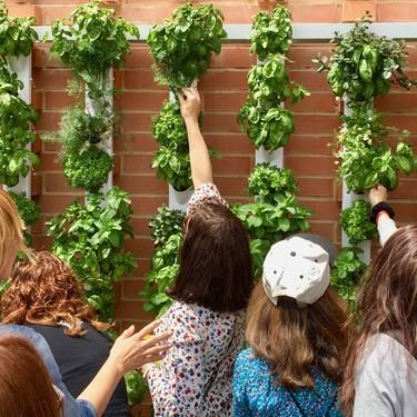 Si estás deseando tener un huerto vertical te encantará Optimus Garden; una solución modular, limpia y eficaz para cultivar tus plantas en casa