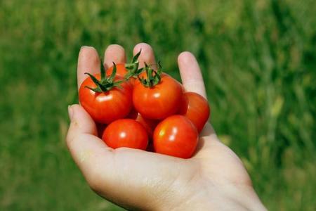 Un sencillo truco para cortar tomates cherry sin esfuerzo