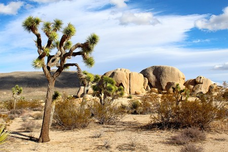 Joshua Tree National Park 74399 960 720