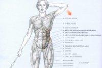 Guía de ejercicios abdominales (X): Flexión lateral de tronco en polea baja