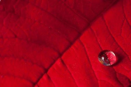 Rojo, por Javier Salazar