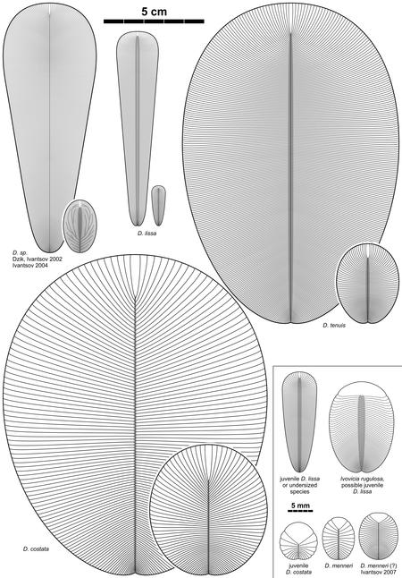 Dickinsonia Species 2