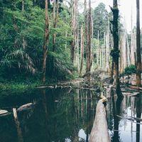El árbol que mide como un edificio de 27 pisos: la tecnología nos está ayudando a desvelar los grandes secretos del Amazonas
