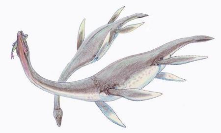 Se descubre un nuevo fósil de un plesiosauro