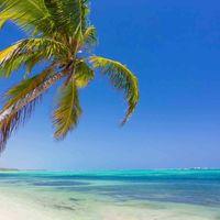 8 Días y 7 noches en Punta Cana con todo incluido en un hotel de cinco estrellas por 1.397 euros en  Logitravel