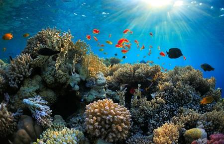 Con esta técnica investigadores quieren salvar el ecosistema de los arrecifes de coral de las costas de México