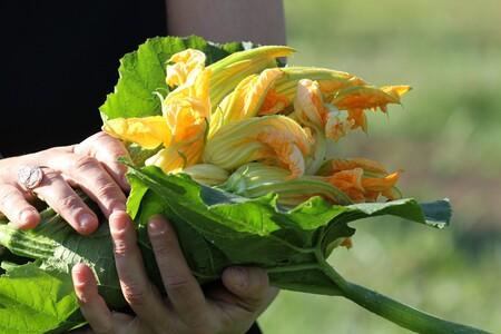 Flores Calabacin Manojo