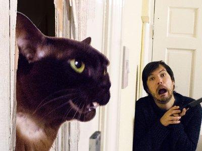 Estos genios recrean junto a sus gatos míticas escenas de películas y el resultado es maravilloso