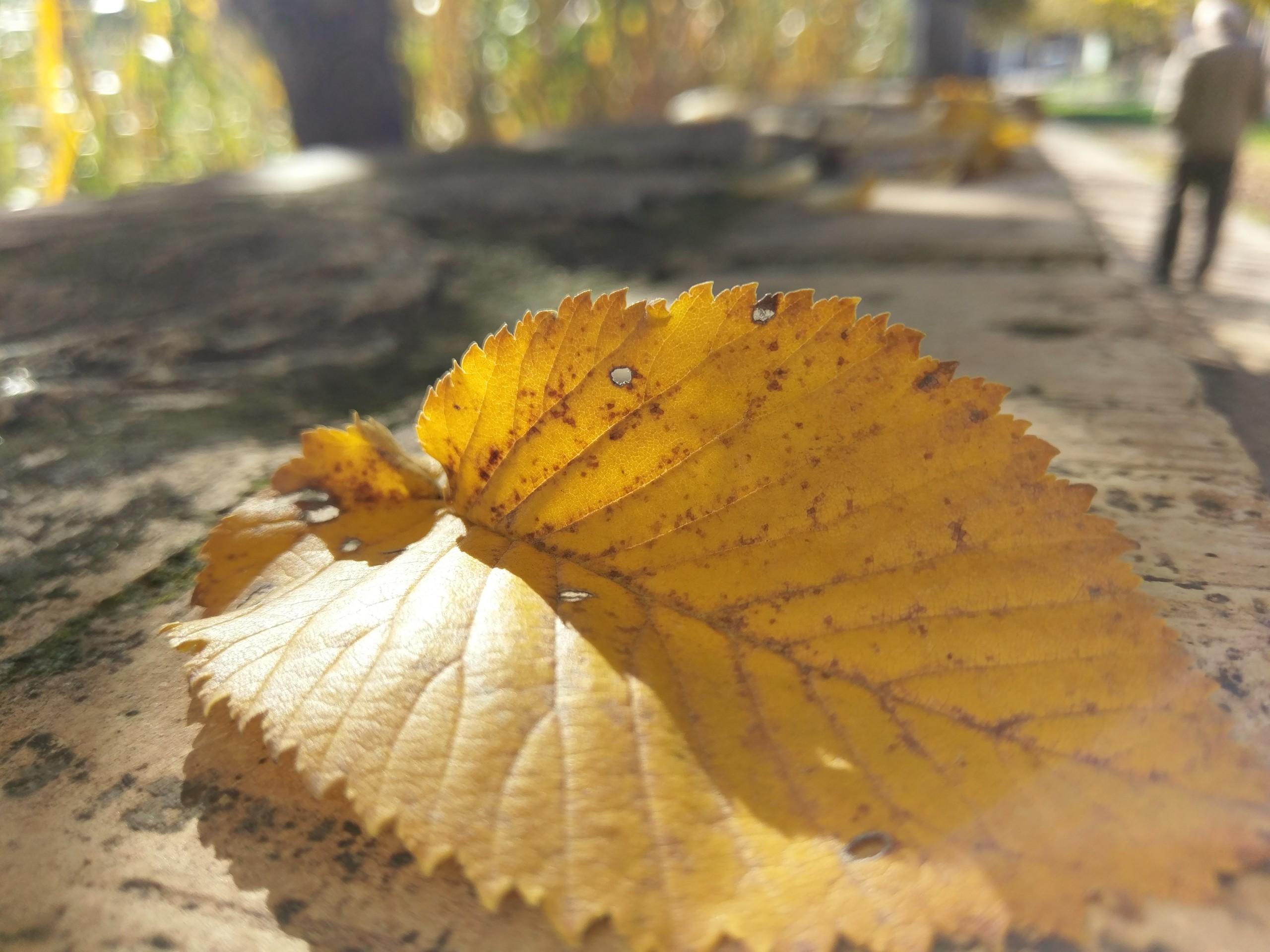 Foto de HTC 10 (9/11)