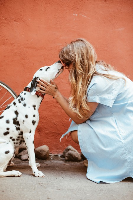 Adult Black And White Dalmatian Licking Face Of Woman 1389994