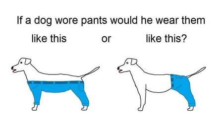 Perro Pantalon
