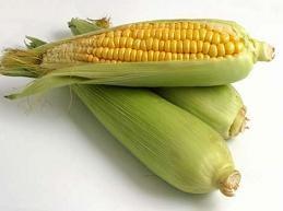Un maíz más nutritivo
