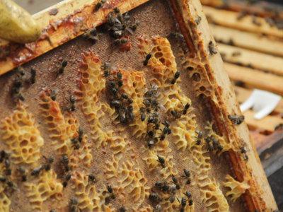 Ser apicultor por un día, toda una experiencia