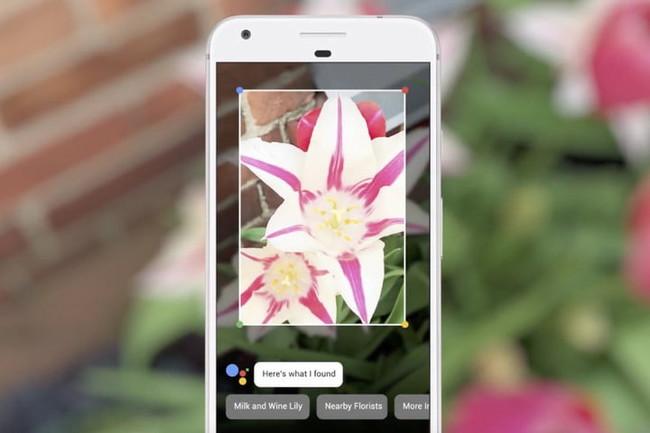Google Lens Camera