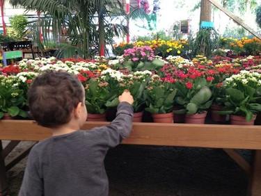 Plantar semillas con niños, mucho más que el simple gesto de sembrar