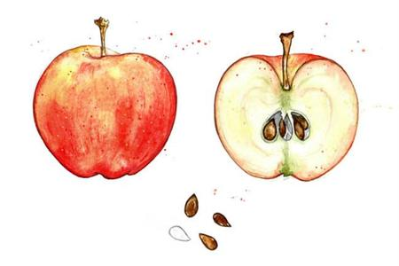 Manzana de Amy Holliday