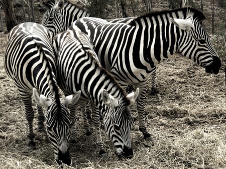 Algunos consejos para fotografiar animales (no domésticos)