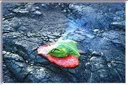 Cocinar con lava