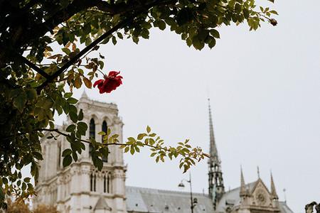 Catedral De Notre Dame Imagenes Antes Del Incendio 15 De Abril 13