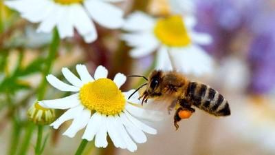 El inspirador aterrizaje de las abejas