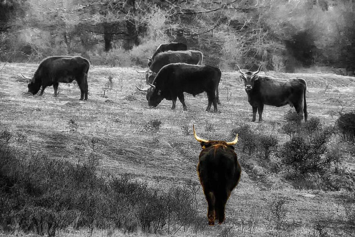 Cómo los individuos inadaptados y solitarios ayudan a la preservación de la especie en el reino animal