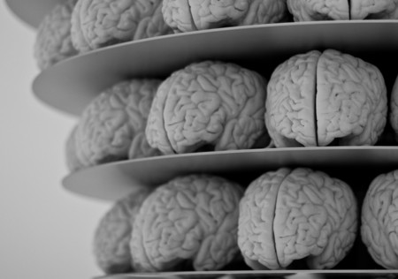 Cerebros 2
