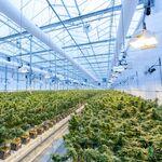 El agujero medioambiental de la marihuana: ya contamina tanto como la minería del carbón