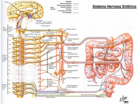 sistema nervioso enterico