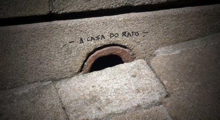 Las ratas no quieren que llegue la fibra óptica a Extremadura