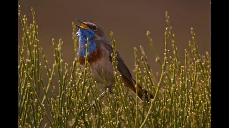 Cómo el sonógrafo revolucionó nuestra comprensión del sonido de los pájaros cuando cantan