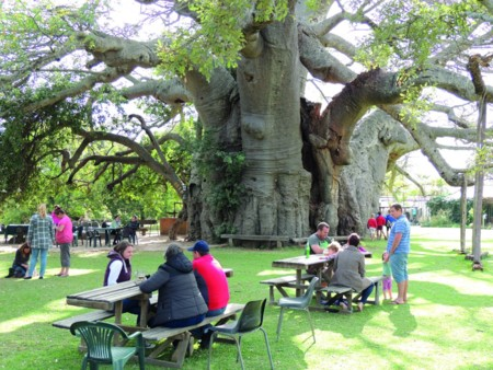 For One Of The Most Natural Drinking Experiences Head To The Baobab Tree Bar In Limpopo South Africa Where The Bar Is Housed In A 72 Foot High Tree The Tree Has Its Own Cellar That Keeps The Beer Inside Cool For Visitors To Enjoy