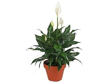 Las mejores plantas para el interior del hogar